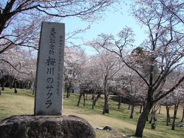 磯部桜川公園の写真
