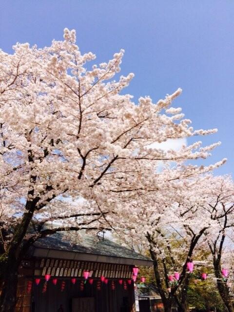 飯山白山森林公園の写真