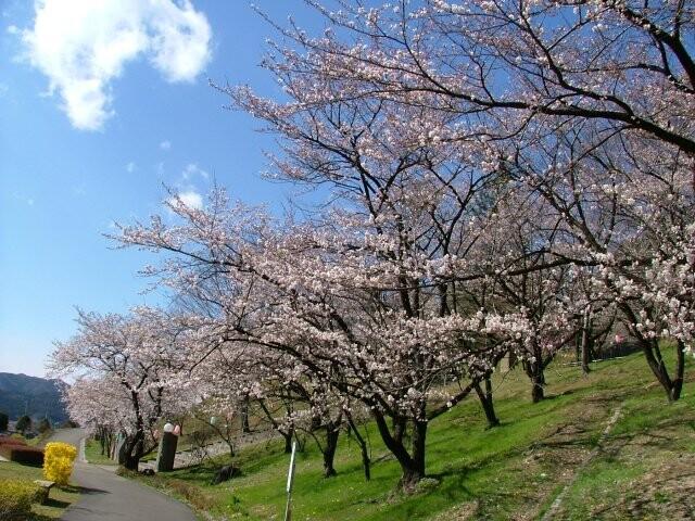 嘉多山公園の写真
