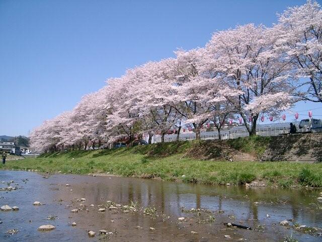 塩田耕地堤の桜の写真