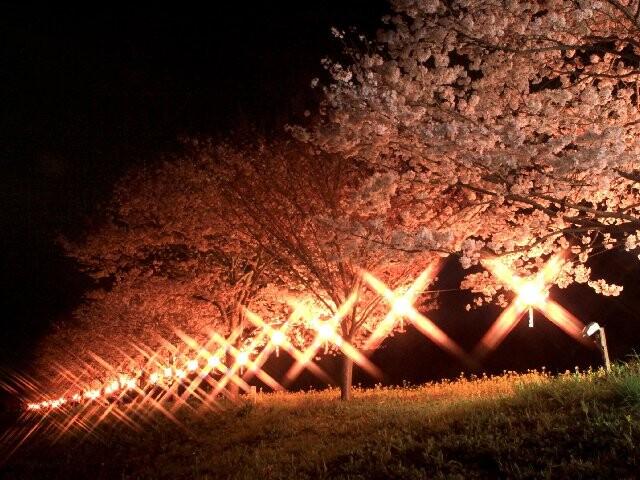 辰ノ口親水公園の写真