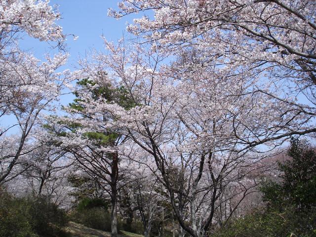 大宮自然公園の写真