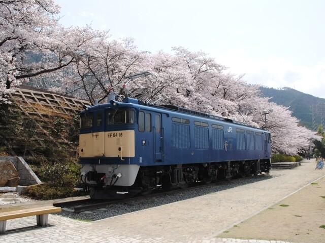 甚六桜の写真