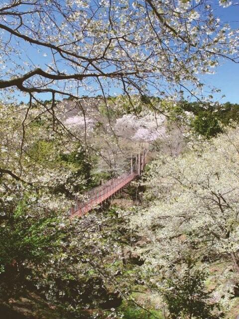 駿河平自然公園の写真
