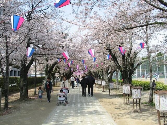 諏訪の桜トンネルの写真