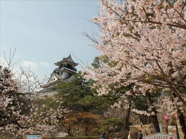 高知公園の写真