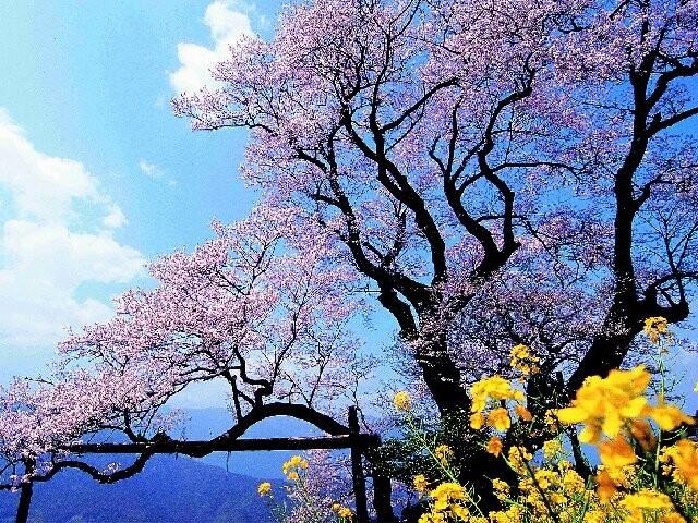 ひょうたん桜公園の写真