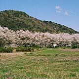 鮎乃瀬公園