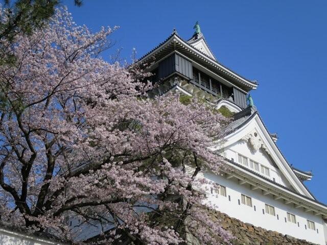 勝山公園(小倉城)の写真