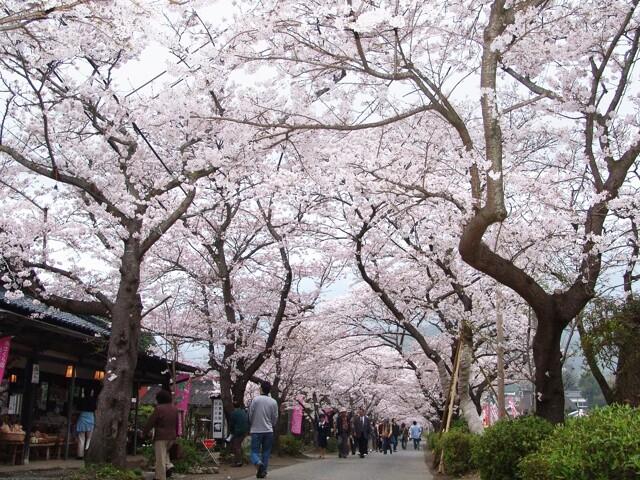 秋月杉の馬場通りの写真