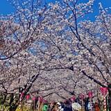 大村公園(二重馬場)