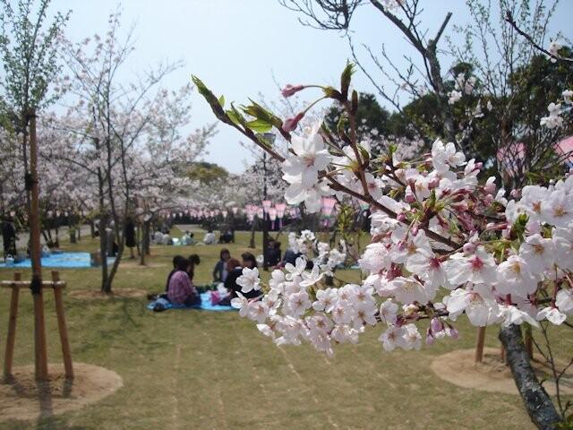亀岡公園の写真