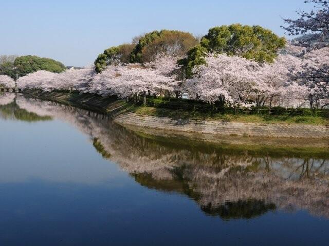 立岡自然公園の写真