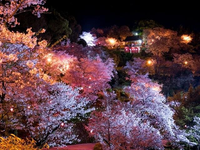 菊池公園の写真