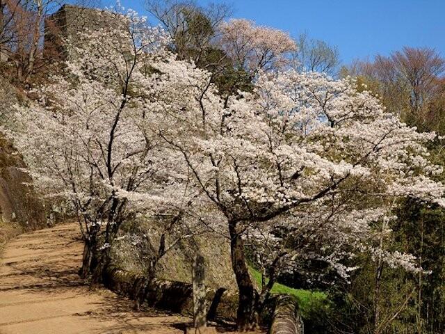 岡城跡の写真
