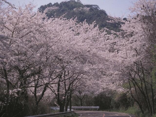 四王寺林道・岩屋城跡の写真