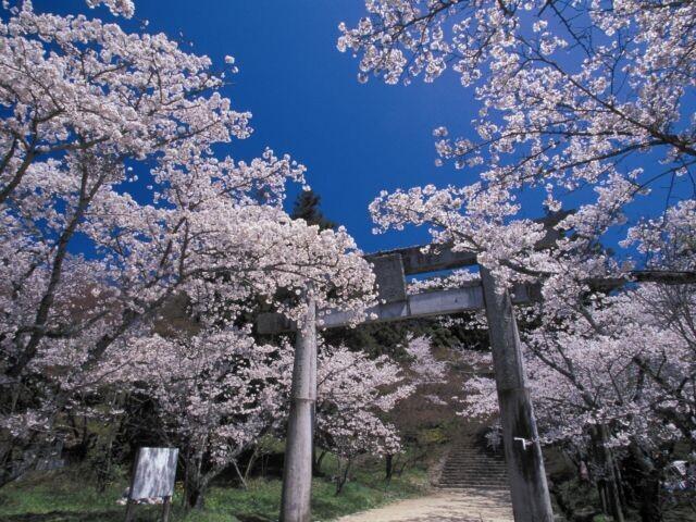 宝満宮 竈門神社の写真