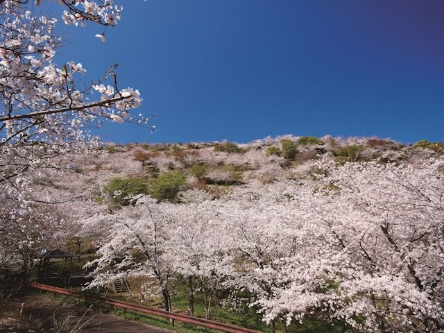 花立公園の写真