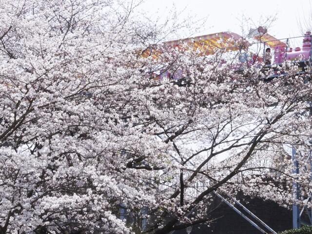 サンリオキャラクターパーク ハーモニーランドの写真