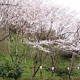 神武山公園