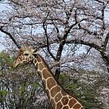 野毛山動物園・野毛山公園
