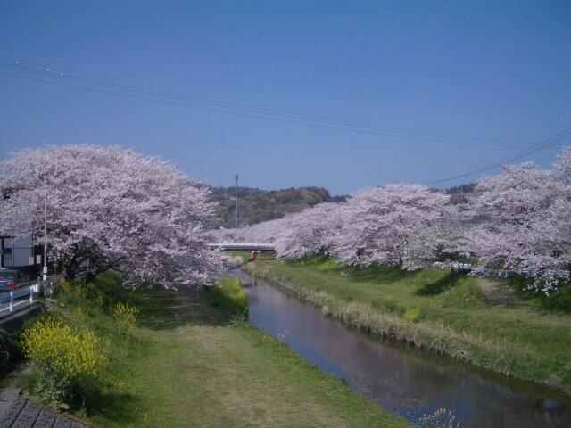 音羽川堤の写真