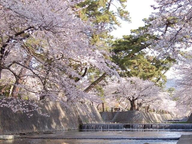 夙川公園(夙川河川敷緑地)の写真