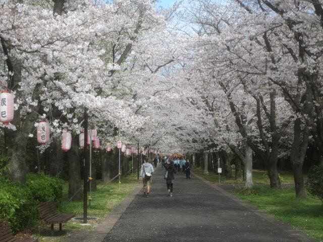 辰巳の森緑道公園の写真