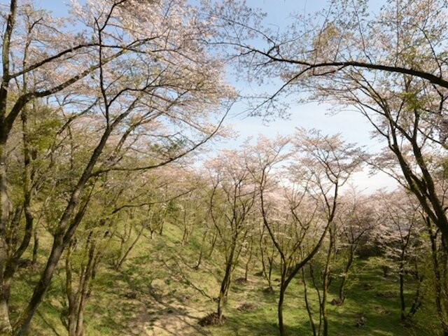 滝山公園の写真