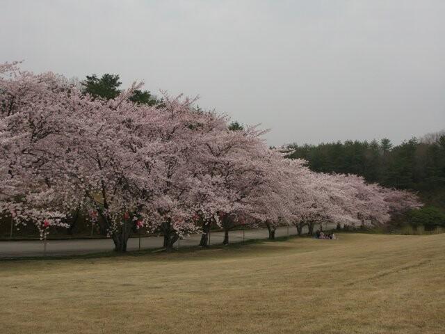 能登町柳田植物公園の写真