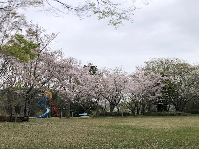 羽黒山公園の写真