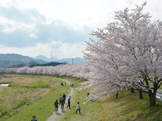 こだま千本桜の写真