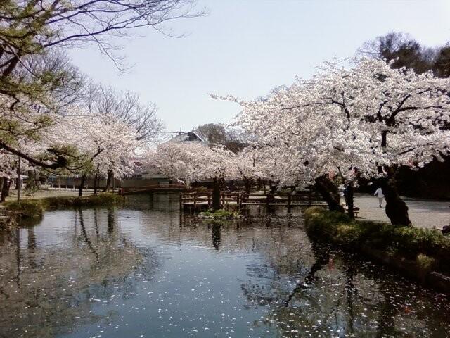 若泉公園の写真