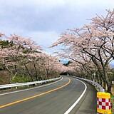 箱根ターンパイク 御所の入駐車場付近