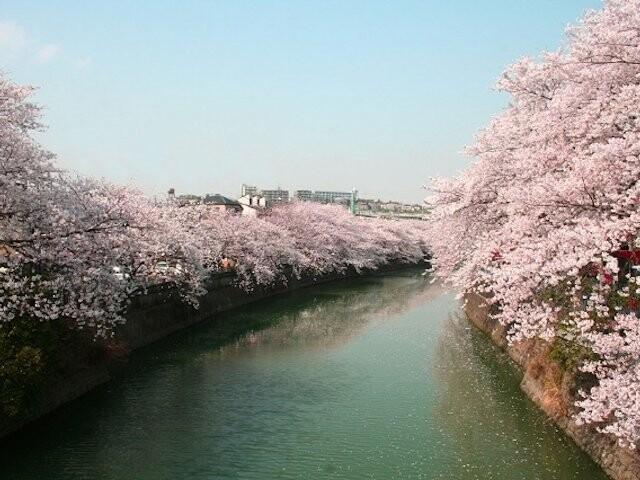 大岡川プロムナードの写真