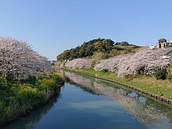 勝間田川沿い