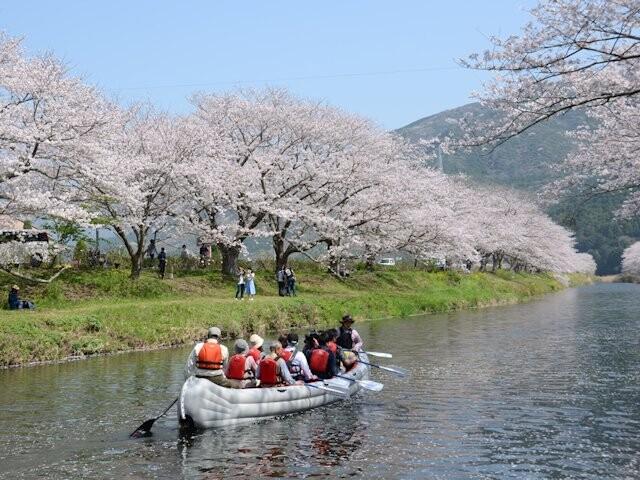 那賀川沿いの桜並木の写真
