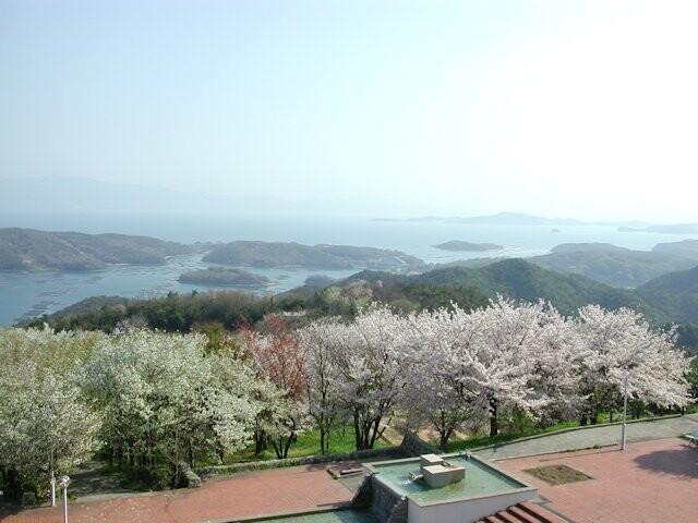 岡山いこいの村(シダレザクラ)の写真