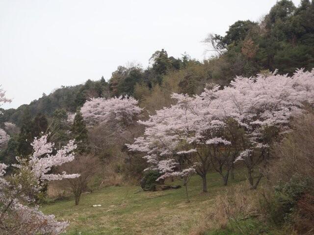 今富ダム公園の写真