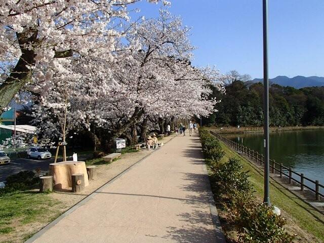 滝の宮公園の写真