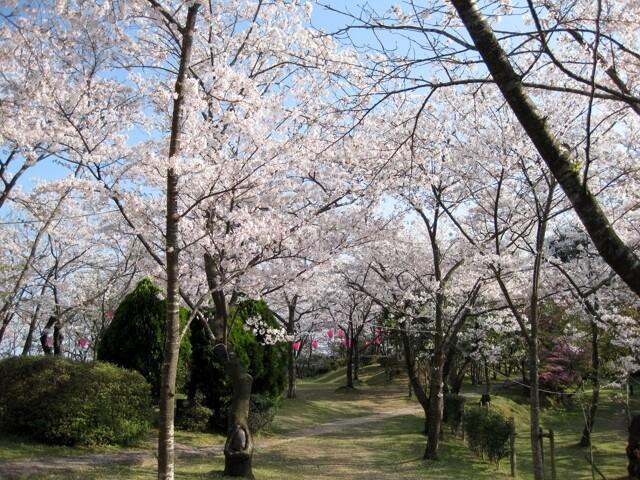 為松公園の写真