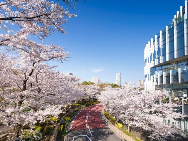 東京ミッドタウン ミッドタウン・ガーデンの写真