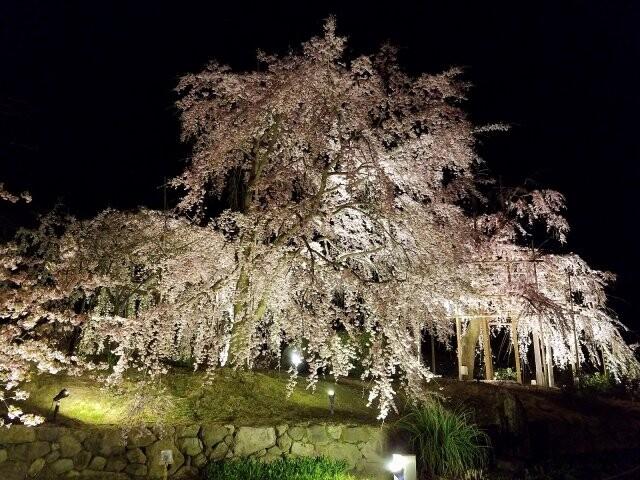 宇治市植物公園の写真