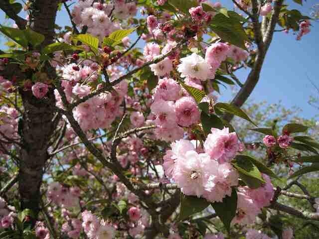 大村公園(大村神社)の写真