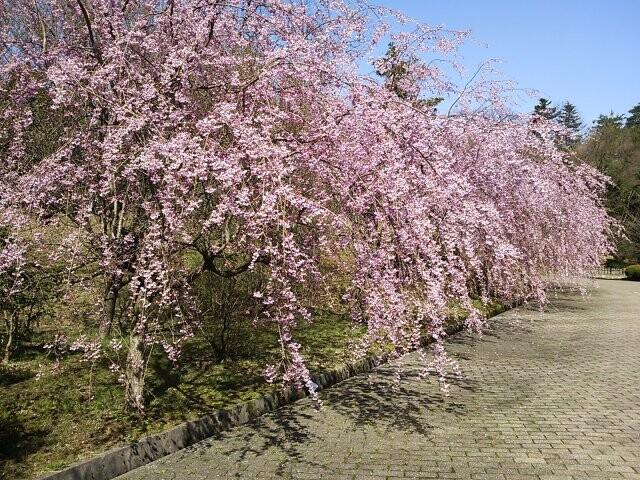 七尾市希望の丘公園の写真