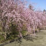 七尾市希望の丘公園