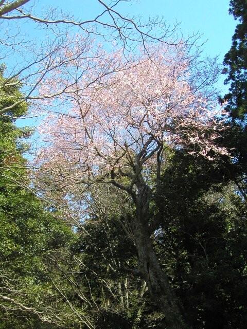 昭和の森会館の写真