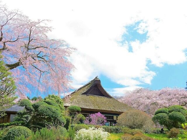 秩父宮記念公園の写真