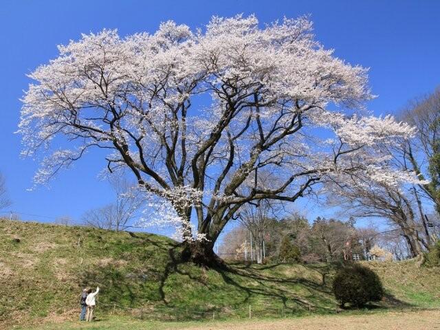 鉢形城公園(エドビガン)の写真