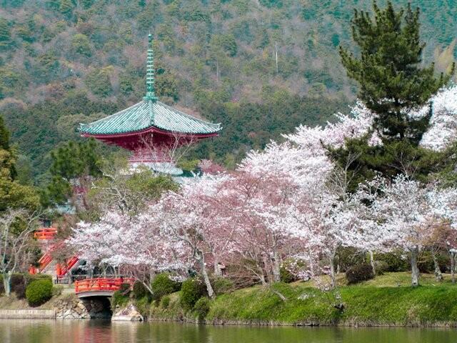 旧嵯峨御所 大本山大覚寺(大沢池エリア)の写真
